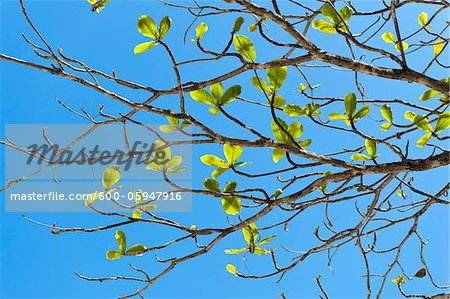 Close-up of Tree Branch, Praia do Sono Beach, Brazil Stock Photo - Premium Royalty-Free, Image code: 600-05947916