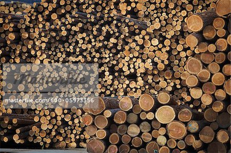 Logs, Merritt, Nicola Country, British Columbia, Canada Stock Photo - Premium Royalty-Free, Image code: 600-05973356