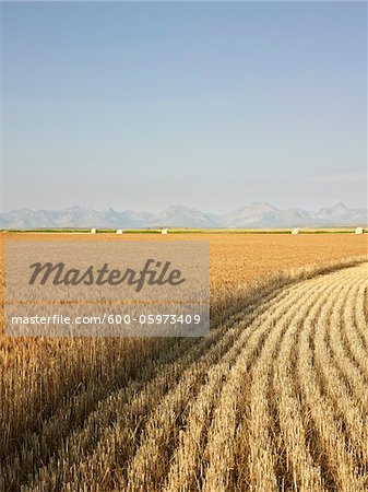 Partially Harvested Wheat Field, Rocky Mountains in Distance, Pincher Creek, Alberta, Canada Stock Photo - Premium Royalty-Free, Image code: 600-05973409