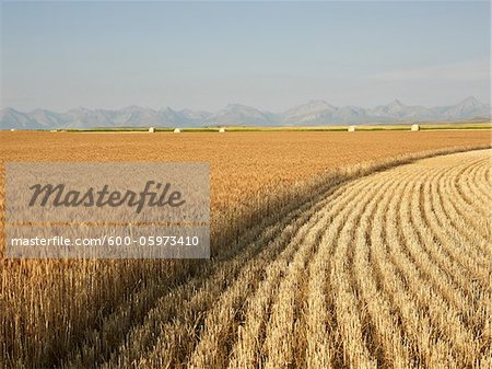 Partially Harvested Wheat Field, Rocky Mountains in Distance, Pincher Creek, Alberta, Canada Stock Photo - Premium Royalty-Free, Image code: 600-05973410