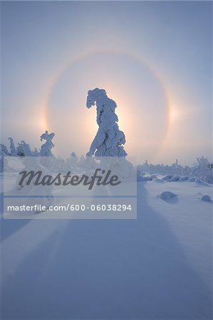 Halo and Snow Covered Trees, Fichtelberg, Ore Mountains, Saxony, Germany Stock Photo - Premium Royalty-Free, Image code: 600-06038294