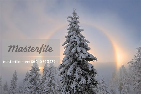 Halo and Snow Covered Trees, Ore Mountains, Fichtelberg, Saxony, Germany Stock Photo - Premium Royalty-Free, Image code: 600-06038301