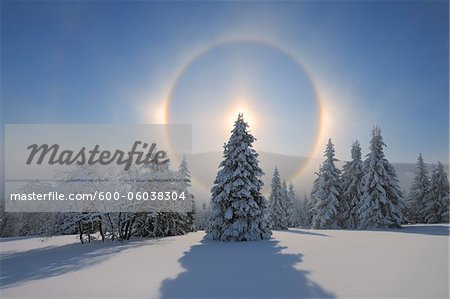 Halo and Snow Covered Trees, Fichtelberg, Ore Mountains, Saxony, Germany Stock Photo - Premium Royalty-Free, Image code: 600-06038304