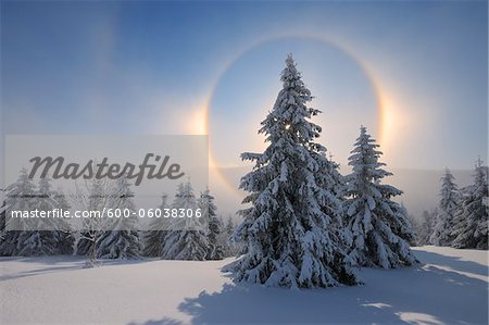 Halo and Snow Covered Trees, Fichtelberg, Ore Mountains, Saxony, Germany Stock Photo - Premium Royalty-Free, Image code: 600-06038306