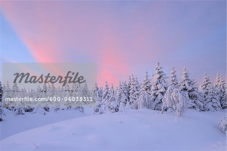 Snow Covered Trees at Sunrise, Fichtelberg, Ore Mountains, Saxony, Germany Stock Photo - Premium Royalty-Free, Image code: 600-06038311