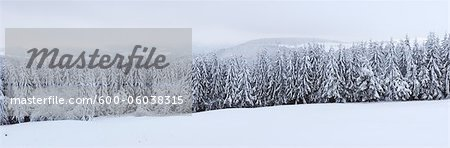 Snow Covered Forest, Rhoen, Rhon Mountains, Hesse, Germany Stock Photo - Premium Royalty-Free, Image code: 600-06038315