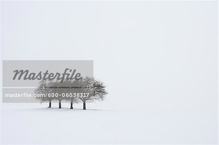 Group of Trees in Winter, Franconia, Bavaria, Germany Stock Photo - Premium Royalty-Free, Image code: 600-06038317