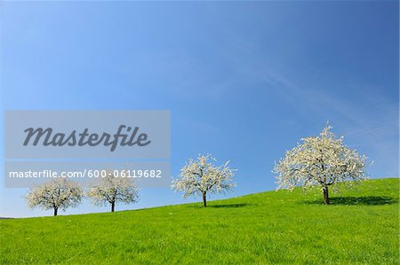 Cherry Trees and Meadow, Baden-Wurttemberg, Germany Stock Photo - Premium Royalty-Free, Image code: 600-06119682