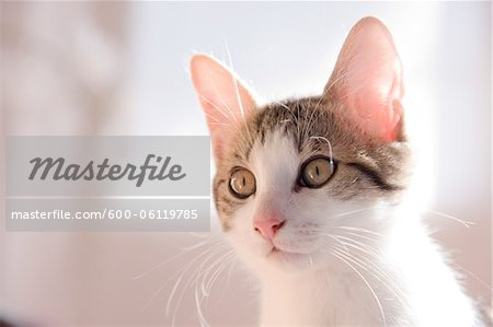 Portrait of Kitten Stock Photo - Premium Royalty-Free, Image code: 600-06119785