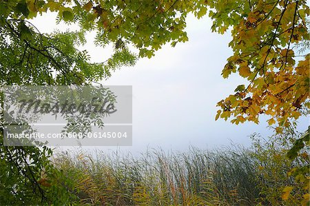 Trees and Lake, Hesse, Germany Stock Photo - Premium Royalty-Free, Image code: 600-06145004