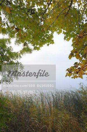 Trees and Lake, Hesse, Germany Stock Photo - Premium Royalty-Free, Image code: 600-06145005
