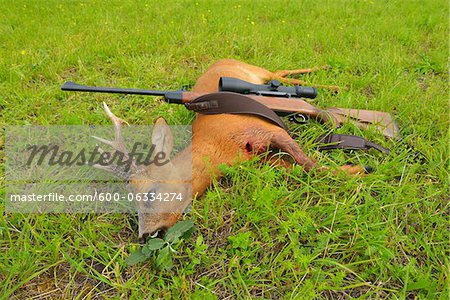 European Roebuck with Rifle, Hesse, Germany Stock Photo - Premium Royalty-Free, Image code: 600-06334274