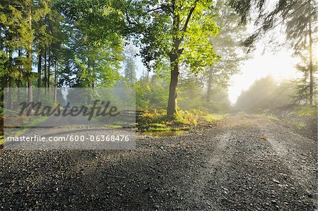 Forked Forest Path with Morning Mist and Sun, Michelstadt, Odenwald, Hesse, Germany Stock Photo - Premium Royalty-Free, Image code: 600-06368476
