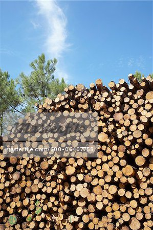 Pile of Logs, Lacanau, Gironde, Aquitaine, France Stock Photo - Premium Royalty-Free, Image code: 600-06407758