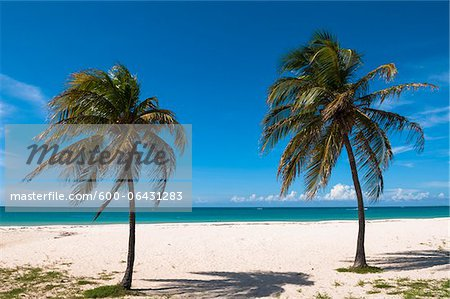 Palm Trees by Ocean, Palm Beach, Aruba, Lesser Antilles, Caribbean Stock Photo - Premium Royalty-Free, Image code: 600-06431283
