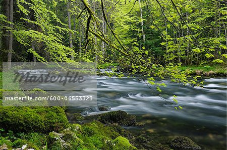 Spring Foliage along Orbe River, Vallorbe, Jura Mountains, Canton of Vaud, Switzerland Stock Photo - Premium Royalty-Free, Image code: 600-06553323