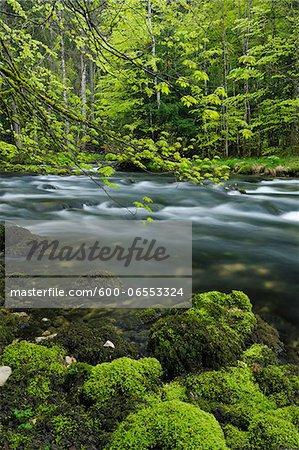 Spring Foliage along Orbe River, Vallorbe, Jura Mountains, Canton of Vaud, Switzerland