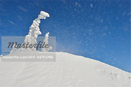 Lusen Mountain Summit with Blowing Snow in Winter, Grafenau, Bavarian Forest National Park, Bavaria, Germany Stock Photo - Premium Royalty-Free, Image code: 600-06701786