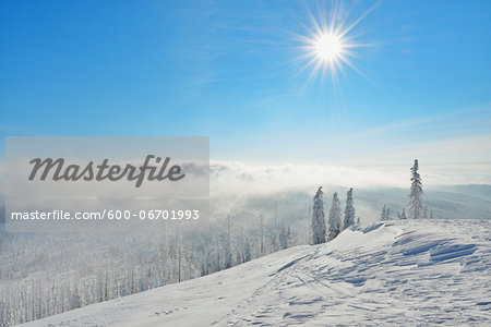 Snow Covered Conifer Forest in the Winter, Grafenau, Lusen, National Park Bavarian Forest, Bavaria, Germany Stock Photo - Premium Royalty-Free, Image code: 600-06701993