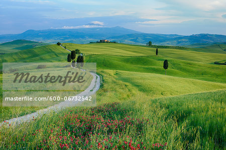 Path passing through green fields treelined with cypress trees and Mount Amiata in background. Pienza, Siena Province, Val d´Orcia, Tuscany, Italy, Mediterranean Area. Stock Photo - Premium Royalty-Free, Image code: 600-06732542