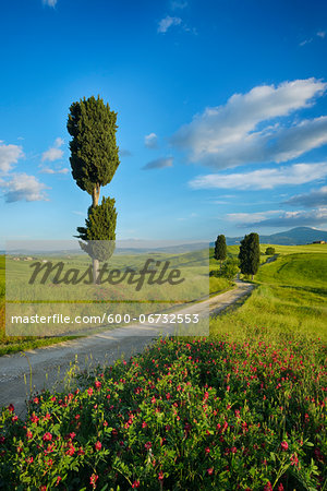 Cypress trees along country road, through green fields. Pienza, Val d´Orcia, Siena Province, Tuscany, Italy. Stock Photo - Premium Royalty-Free, Image code: 600-06732553