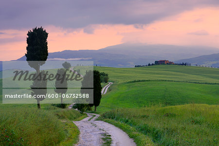 Cypress trees along country road, sunset. Pienza, Val d'Orcia, Tuscany, Italy. Stock Photo - Premium Royalty-Free, Image code: 600-06732588