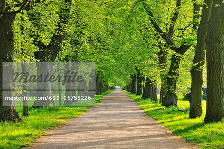 Lime Tree Avenue in Spring, Aschaffenburg, Bavaria, Spessart, Germany Stock Photo - Premium Royalty-Free, Image code: 600-06758226