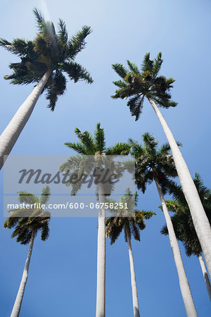 Looking up at Palm Trees and Blue Sky, Havana, Cuba Stock Photo - Premium Royalty-Free, Image code: 600-06758251