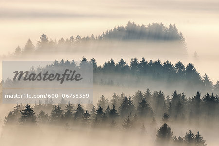Morning Mist, Kochelmoor, Bad Tolz-Wolfratshausen, Upper Bavaria, Bavaria, Germany Stock Photo - Premium Royalty-Free, Image code: 600-06758359