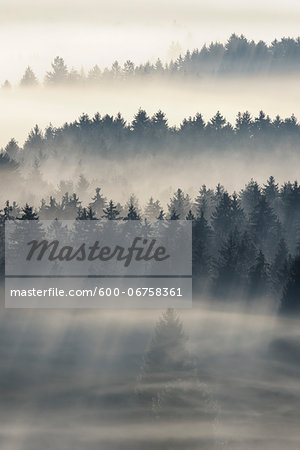 Morning Mist, Kochelmoor, Bad Tolz-Wolfratshausen, Upper Bavaria, Bavaria, Germany Stock Photo - Premium Royalty-Free, Image code: 600-06758361