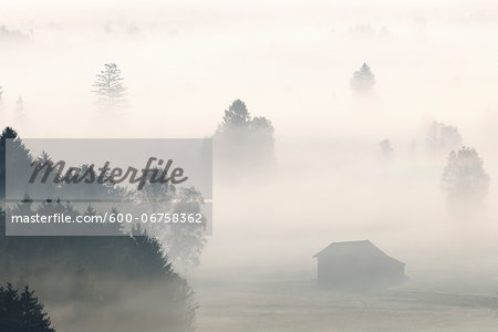 Morning Mist, Kochelmoor, Bad Tolz-Wolfratshausen, Upper Bavaria, Bavaria, Germany Stock Photo - Premium Royalty-Free, Image code: 600-06758362