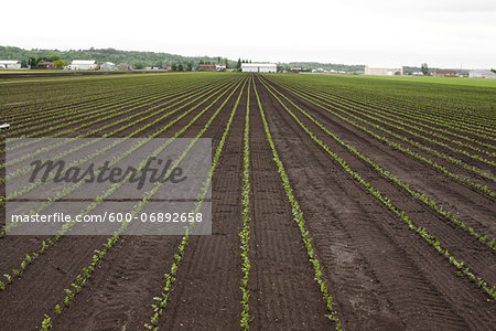Farmland, Bradford, Ontario, Canada Stock Photo - Premium Royalty-Free, Image code: 600-06892658