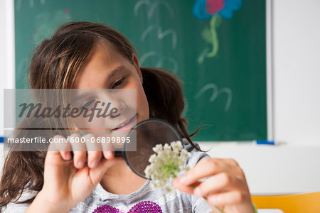 Girl in classroom examining flower with magnifying glass, Germany Stock Photo - Premium Royalty-Free, Image code: 600-06899895