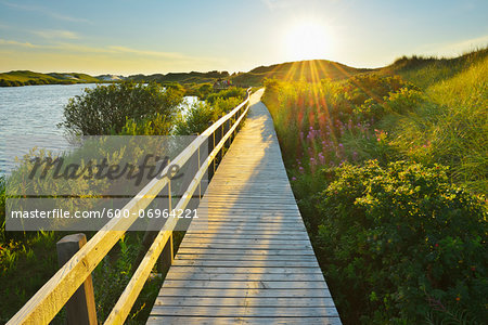 Boardwalk through Dunes, Summer, Wittduen, Amrum, Schleswig-Holstein, Germany Stock Photo - Premium Royalty-Free, Image code: 600-06964221