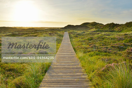 Wooden Walkway through Dunes with Sun, Summer, Norddorf, Amrum, Schleswig-Holstein, Germany Stock Photo - Premium Royalty-Free, Image code: 600-06964235