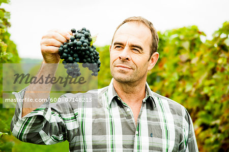Portrait of grape grower standing in vineyard, examining bundle of grapes, Rhineland-Palatinate, Germany Stock Photo - Premium Royalty-Free, Image code: 600-07148213