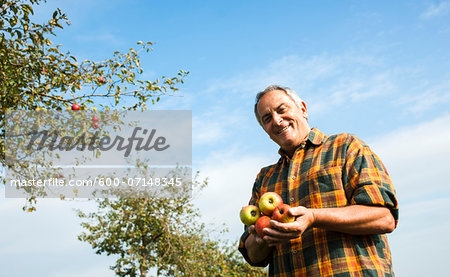 Portrait of farmer holding apples in orchard, Germany Stock Photo - Premium Royalty-Free, Image code: 600-07148345