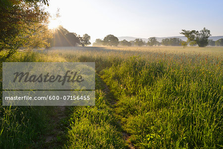 Path in meadow with sun in Spring, Kahl, Alzenau, Bavaria, Germany Stock Photo - Premium Royalty-Free, Image code: 600-07156455