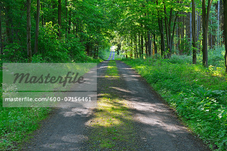 Forest Path in Spring, Kefenrod, Hesse, Germany Stock Photo - Premium Royalty-Free, Image code: 600-07156461