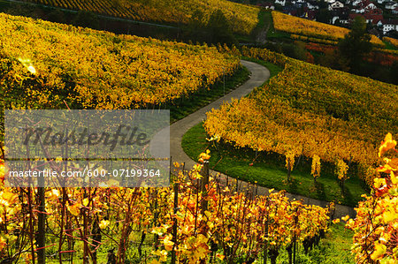 Vineyard Landscape, Ortenau, Baden Wine Route, Baden-Wurttemberg, Germany Stock Photo - Premium Royalty-Free, Image code: 600-07199364