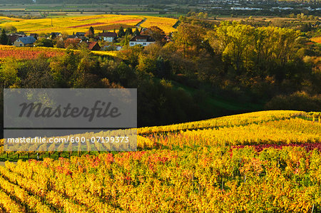 Vineyard Landscape, Ortenau, Baden Wine Route, Baden-Wurttemberg, Germany Stock Photo - Premium Royalty-Free, Image code: 600-07199373