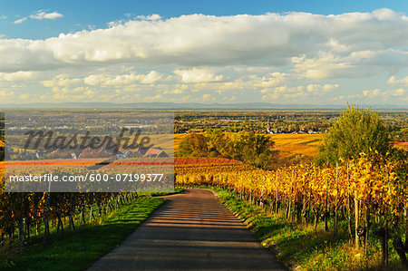 Vineyard Landscape, Ortenau, Baden Wine Route, Baden-Wurttemberg, Germany Stock Photo - Premium Royalty-Free, Image code: 600-07199377