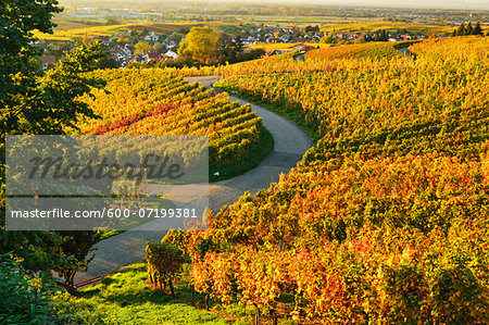 Vineyard Landscape, Ortenau, Baden Wine Route, Baden-Wurttemberg, Germany Stock Photo - Premium Royalty-Free, Image code: 600-07199381