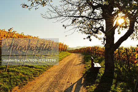 Vineyard Landscape, Ortenau, Baden Wine Route, Baden-Wurttemberg, Germany Stock Photo - Premium Royalty-Free, Image code: 600-07199399