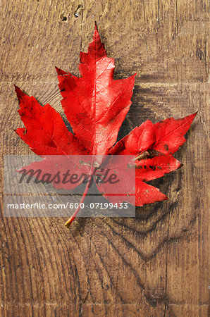 Close-up of Red Maple Leaf on old barn Board Stock Photo - Premium Royalty-Free, Image code: 600-07199433