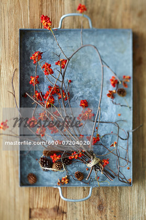 Overhead View of American Bittersweet Vine Dried with Pinecones on Metal Tray as Fall Decor Stock Photo - Premium Royalty-Free, Image code: 600-07204020