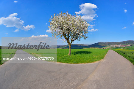 Forked Road with Blossoming Cherry in Spring, Miltenberg, Spessart, Franconia, Bavaria, Germany Stock Photo - Premium Royalty-Free, Image code: 600-07278730