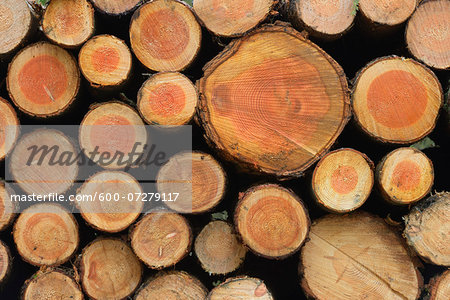 Stack of Spruce Logs, Odenwald, Hesse, Germany Stock Photo - Premium Royalty-Free, Image code: 600-07279117