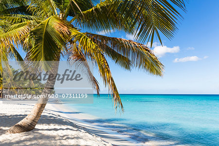 Coconut palm trees and white beach by turquoise clear water, Del Este National Park (Parque Nacional del Este), Dominican Republic, Caribbean Stock Photo - Premium Royalty-Free, Image code: 600-07311199