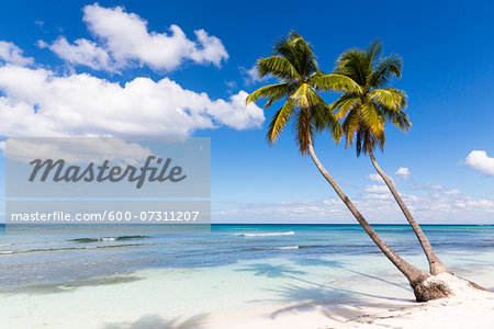 Coconut palm trees and white beach by turquoise clear water, Del Este National Park (Parque Nacional del Este), Dominican Republic, Caribbean Stock Photo - Premium Royalty-Free, Image code: 600-07311207